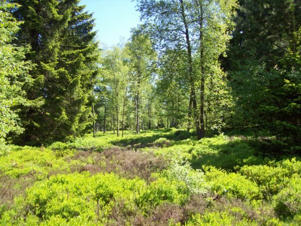 Auf der Ginsberger Heide