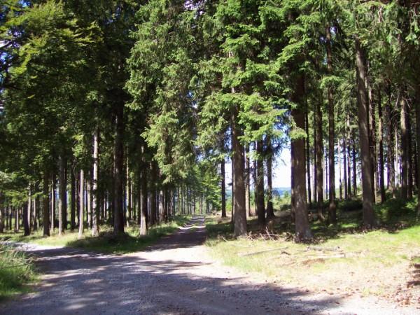 Herrlich schattige Wanderwege
