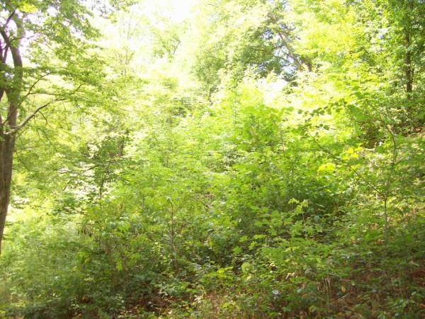 Kontraste - frisches Grün im Hochsommer - und