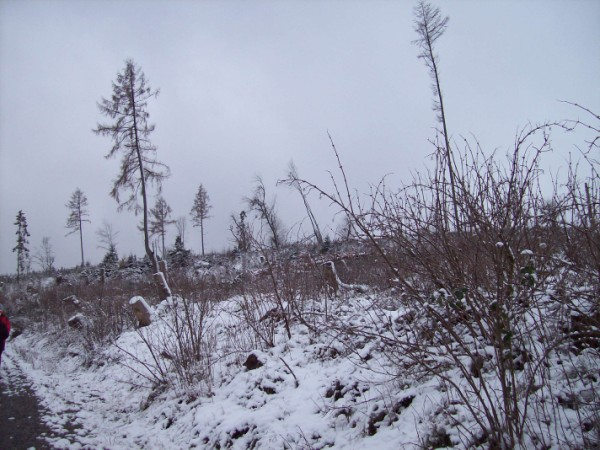 Langsam versinkt die Natur unter dem Schneezauber