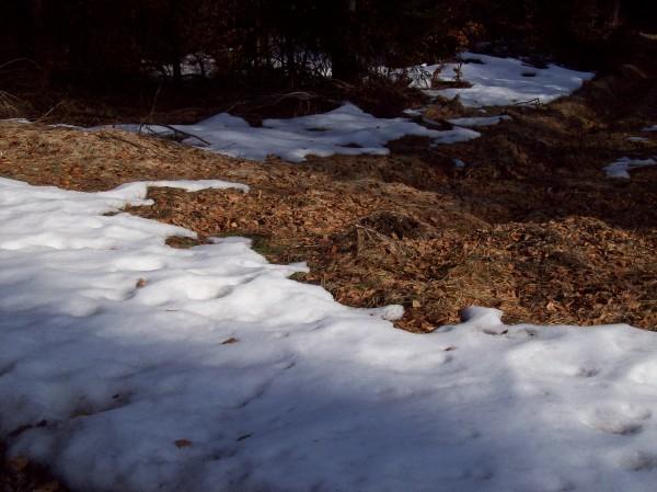 Obwohl die Sonne schien, an schattigen Stellen im Wald gab es noch Schnee, aber, wir haben schließlich erst Anfang März!