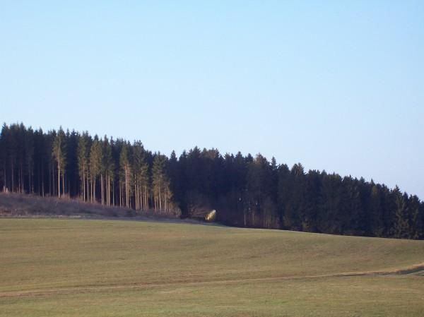 """Eine der Sehenswürdigkeiten des Waldskulpturenweges in der Ferne """"Das Goldene Ei"""""""