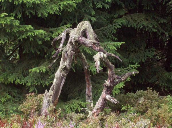 Ein ganz besonderes Exemplar eines Baumstumpfes, der Phantasie waren keine Grenzen gesetzt!