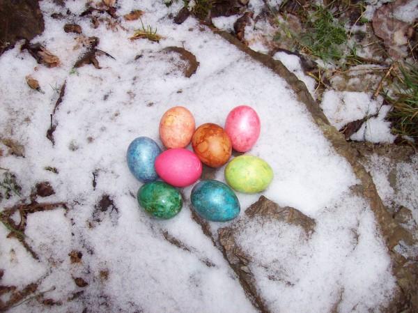 Die Osterhäsin hatte sich viel Mühe gegeben, so hübsche bunte Eier zu produzieren - und -  im Schnee auch einmal ein hübscher Kontrast!