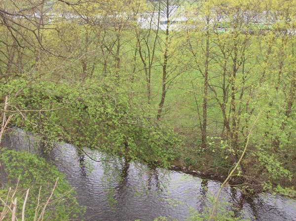 Das frische Grün am Flussufer