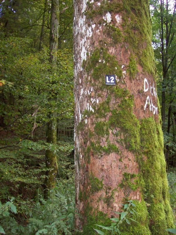 Mit Flechten und Moosen bewachsene Baumstämme