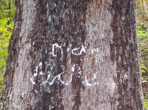 Die dicke Eiche, die Inschrift ist kaum noch zu erkennen