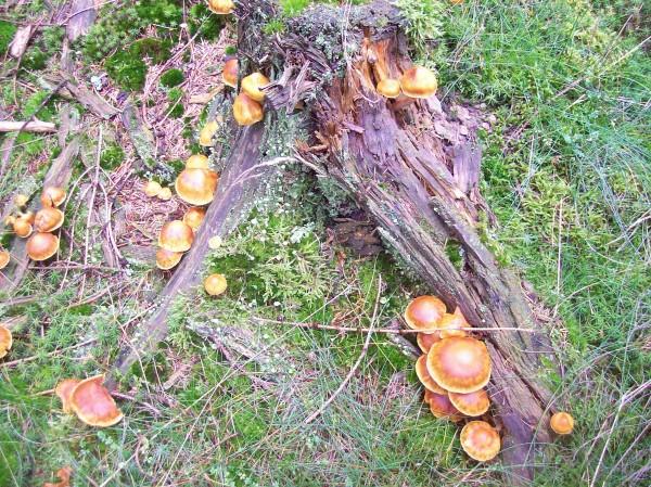 Boten des Herbstes am Wegesrand
