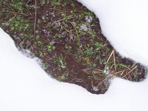 Eine kleine Oase, vorwitzig lugt das kleine Bächlein durch den Schnee