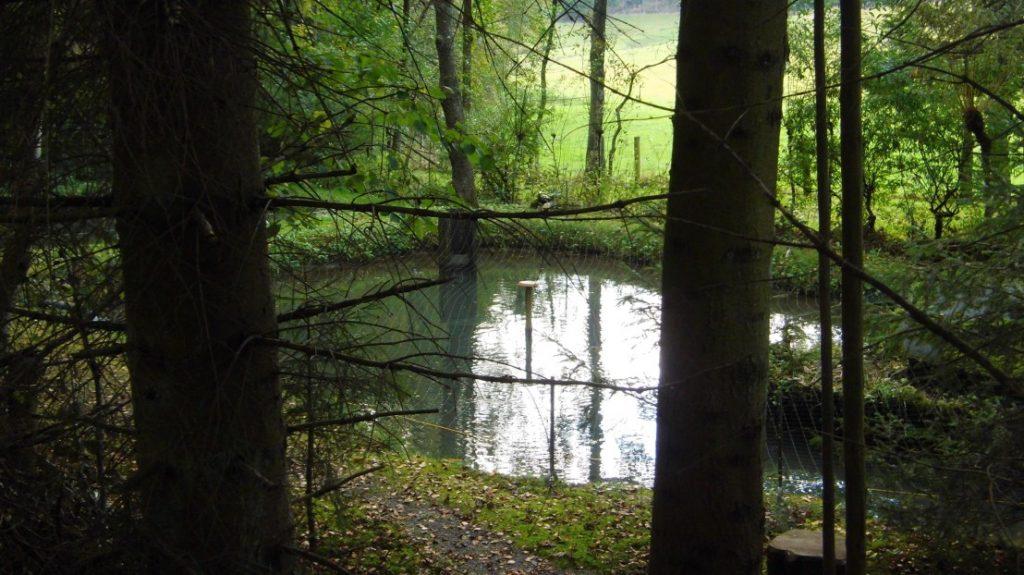 Diesem Teich entstammen die leckeren Riesenforellen