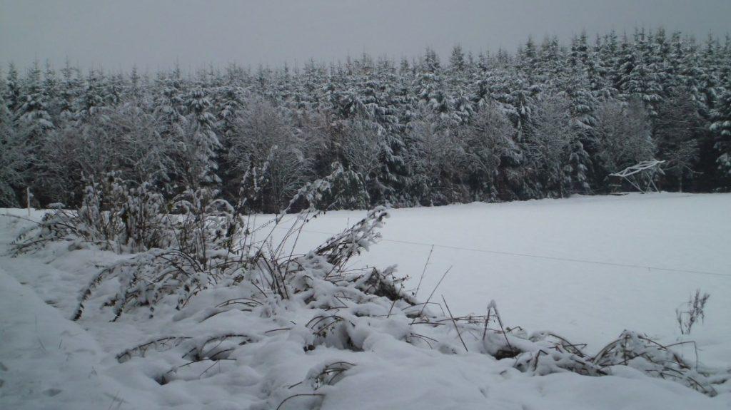 Winter auf der Pastorenwise bei Wunderthausen