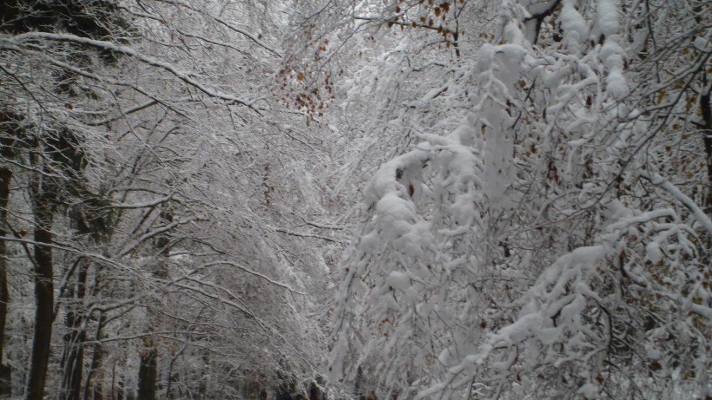 Wunderschön der gefrorene Schnee an den Zweigen