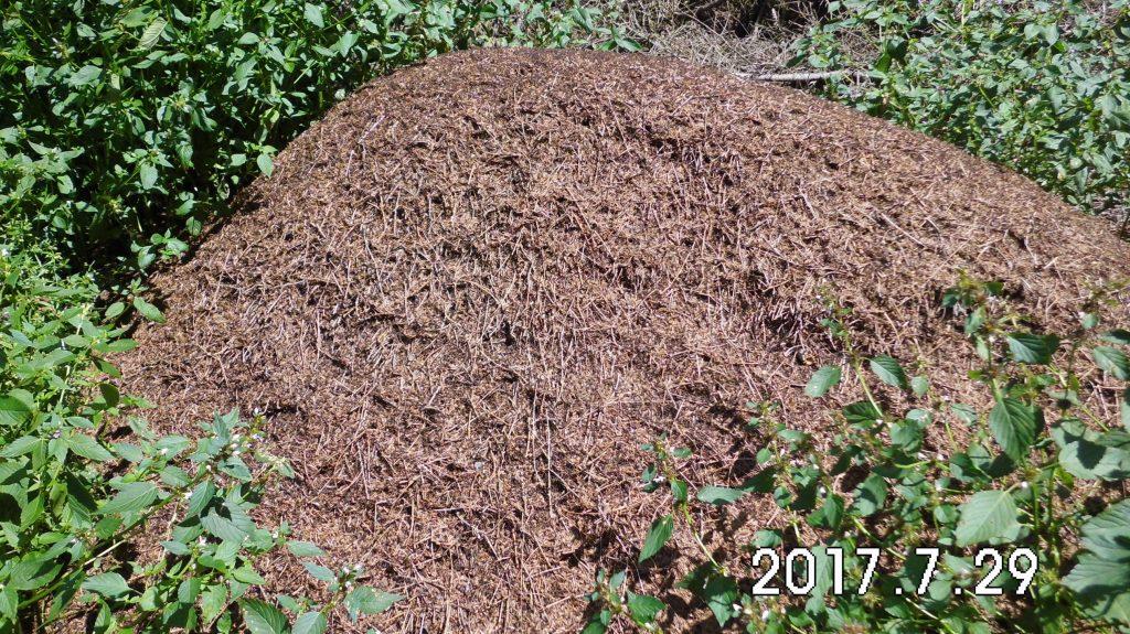 Hier wurde nicht nur fleißig gewandert sondern auch gearbeitet, emsiges Getümmel im Ameisenhaufen