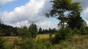 Heidelandschaft direkt vor der Tür im Hochsauerland