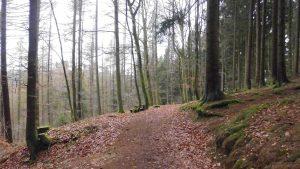 Die Rücktour führte durch belaubte Waldwege Richtung Winterberg, von dort fand der Transfer dann wieder mit dem Linienbus statt.