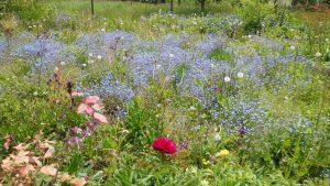 Wunderhübsche Blumenwiese mit Frühjahrsblühern
